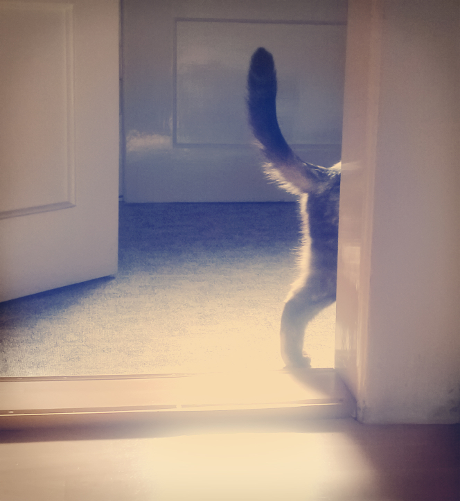 cat in doorway
